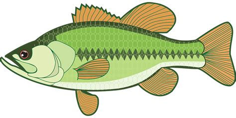 Fisch Bass by Free Vector Graphic Animal Bass Fish Sea Free