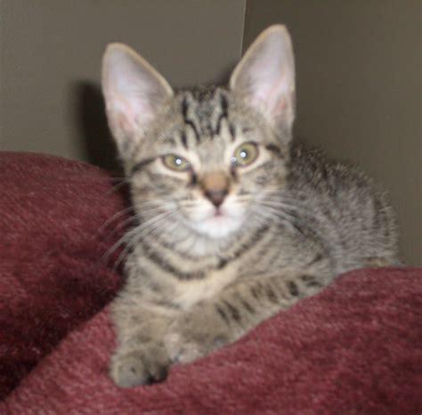 Universal Kitten formerly luke pussycat skittlez
