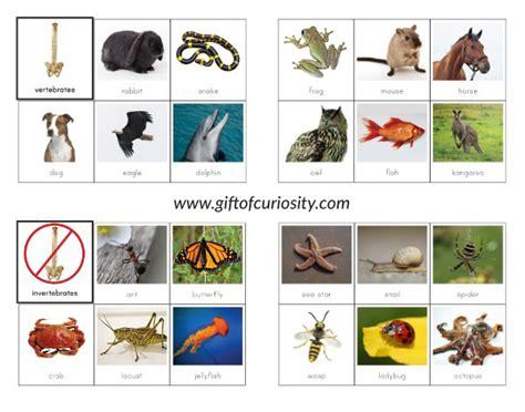 printable animal sorting cards vertebrates vs invertebrates picture sorting cards