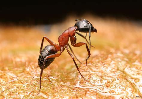 photoshop guide  making  eye ant pxleyescom