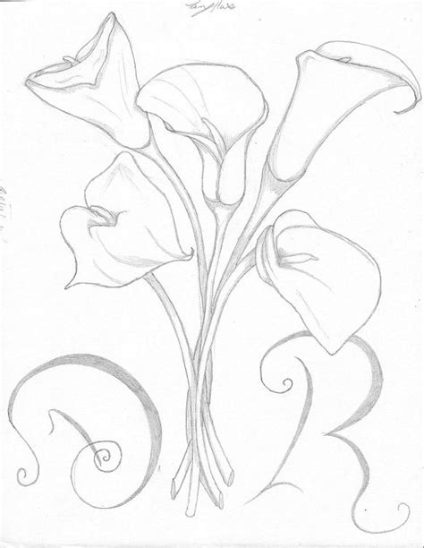 calla lily flowers drawings www pixshark com images