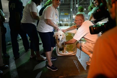 golden retriever puppies rescued from turkey abandoned dogs from turkey find homes in the u s