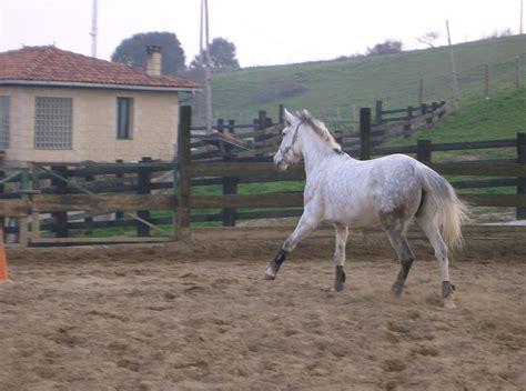 caballo cogida brutal por detras descripciones 3 186 a ayalde
