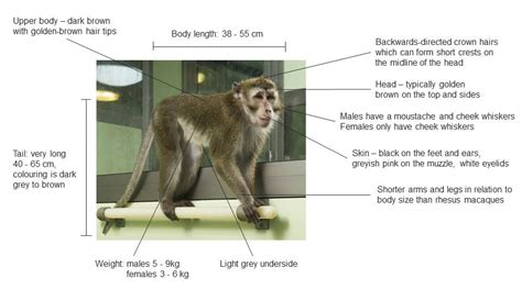 about macaques macaque care