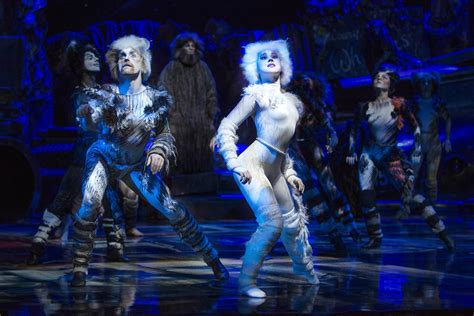 cats musical win tickets to cats the musical perth perth