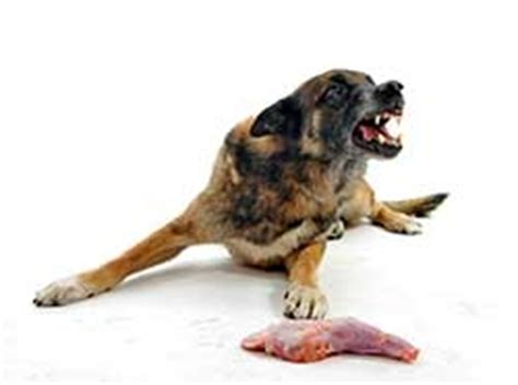 how to stop food aggression in puppies food aggression in dogs