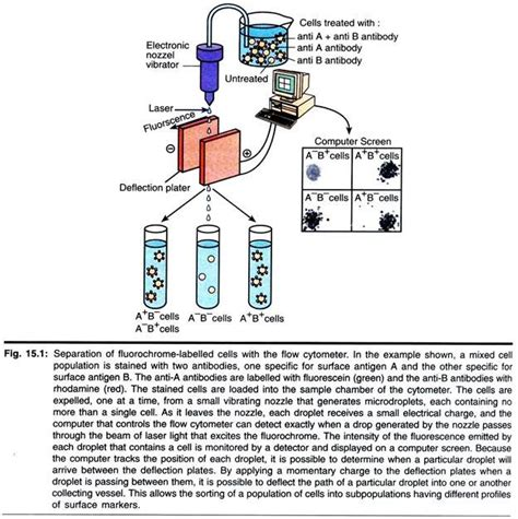 flow cytometry diagram principles of flowcytometry with diagram