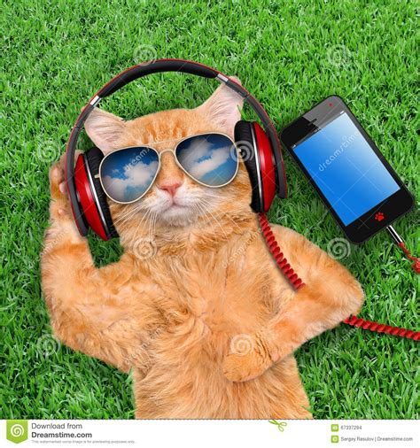 Innobitz Relaxes Your Pet With Bling Mp3 Player by Cat Headphones Stock Photo Image 67337294