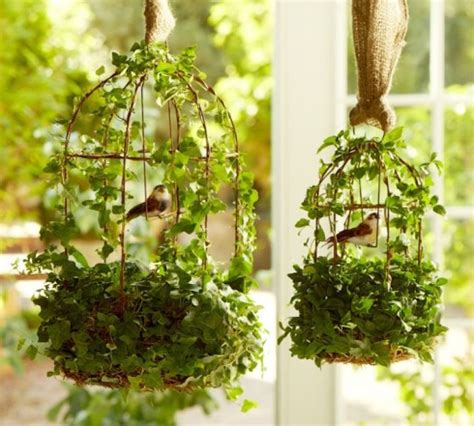 How To Decorate A Birdcage Home Decor by Diy Live Ivy Topiary All Things Heart And Home