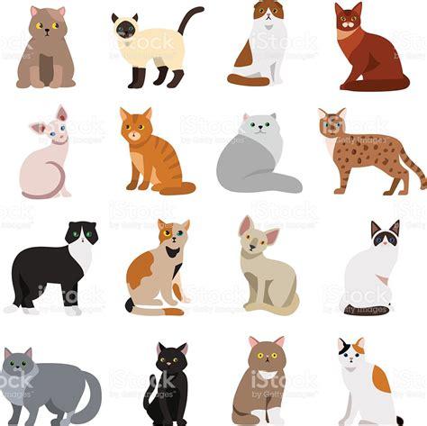 Cat Breeds Cute Pet Animal Set Stock Vector Art & More