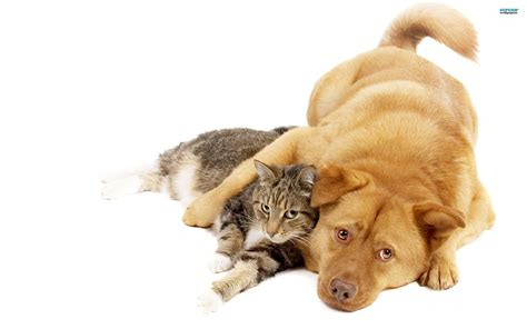 dog wallpapers wallpaper cave cats and dogs wallpapers wallpaper cave