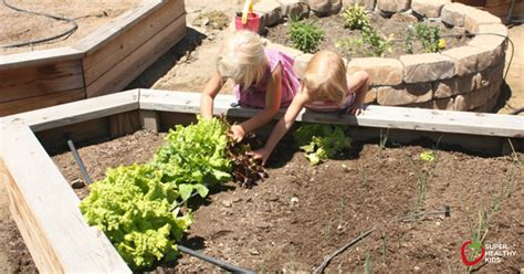 How To Vegetable Gardening Basics Healthy Ideas For Kids Vegetable Gardening Basics
