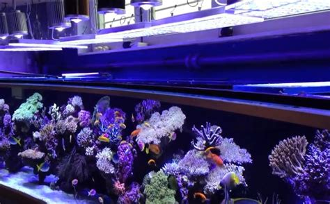 uv l zeeaquarium pieter s 6 meter reef tank avec orphek atlantik