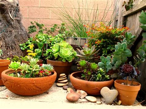Rock Garden With Potted Plants Container Gardening Selecting The Right Fertilizers