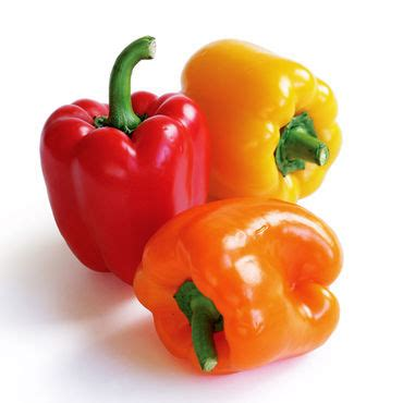 bell peppers for dogs can dogs eat bell peppers green or yellow animalso