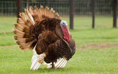 Turkey Pictures
