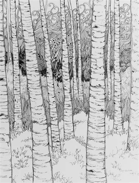 aspen tree drawings aspen forest drawing by terry holliday