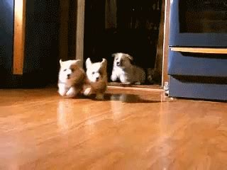 excited puppy gif excited gif find on giphy