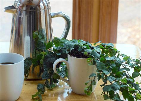 Coffee Grounds In The Garden by Using Coffee Grounds In The Garden Hgtv