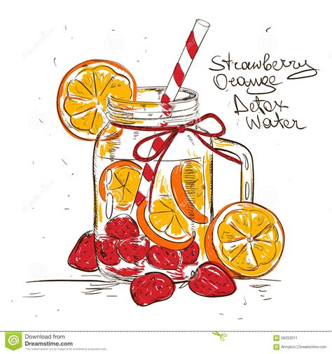 Strawberry Orange Detox Water by Sketch Illustration Of Strawberry Orange Detox Water