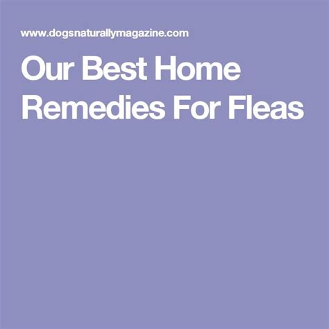 best flea treatment for yorkies 1000 ideas about home remedies fleas on flea remedies fleas and
