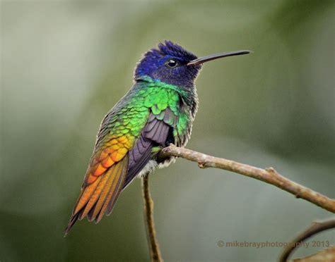colorful hummingbirds colorful hummingbirds search aquarius