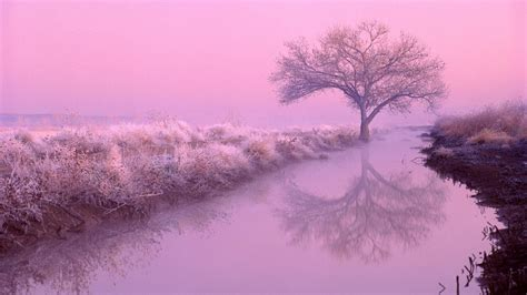 pink color pink wallpapers wallpaper cave pink color wallpapers wallpaper cave