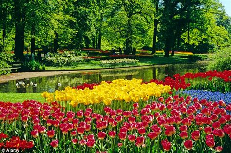 Amsterdam Flower Garden Flower Garden In Amsterdam Cruise From The Of Amsterdam To The Bulb