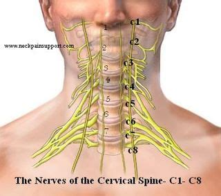 symptoms of nerve damage after c section c5 and c6 nerve damage symptoms pictures to pin on