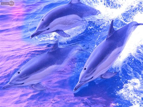 photo collection dolphins wallpaper wallpaperup 1920x1200px