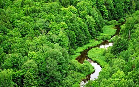 Muson Ormanlari Orman Manzarasi | mart 2012 ahmet sağlam