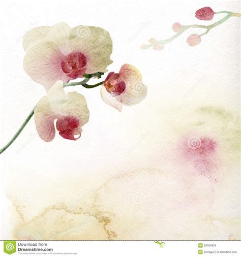 floral background with watercolor orchid royalty free