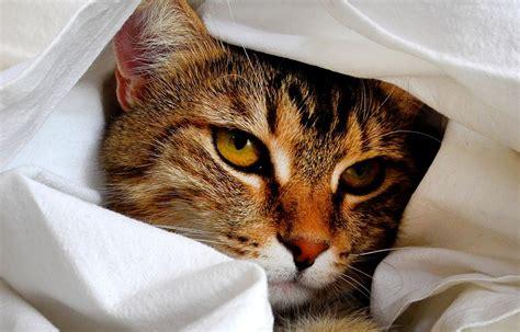 Tempat Makan Kucing Anjing Savic Gourmet Store 15 L tempat penitipan hewan di jakarta yang murah dan bersih lamudi