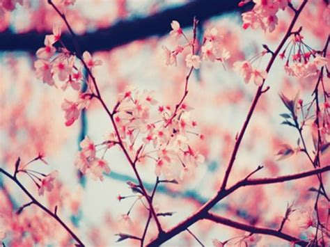 wallpaper tumblr spring spring tumblr backgrounds www imgkid com the image kid