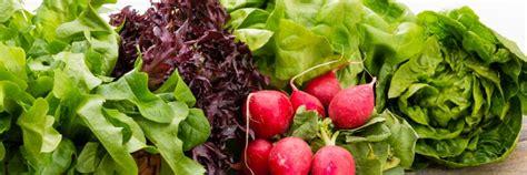 e green vegetables leafy green vegetables bauer