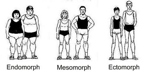 mesomorph endomorph ectomorph types workouts diet