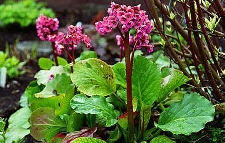 fiori invernali da esterno fiori invernali da esterno i nomi e le immagini foto ecoo