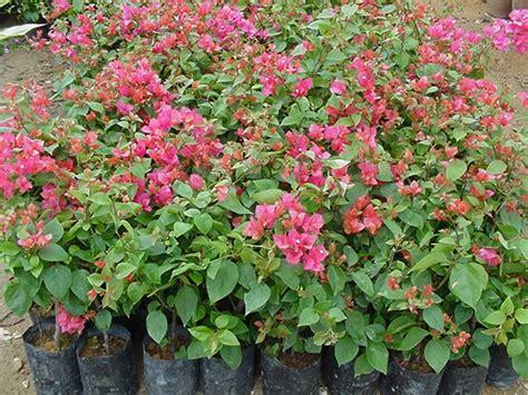 laman mesra keindahan tanaman hiasan