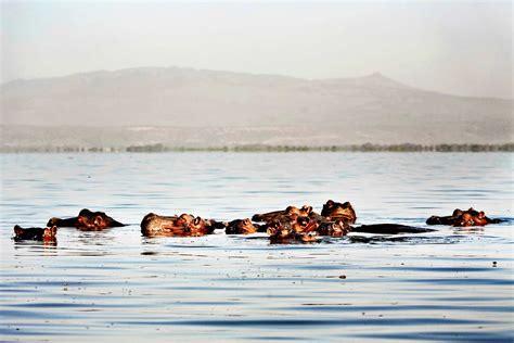 boat ride back to africa lake naivasha boat ride and safari lake naivasha kenya