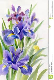 Vibrant Flowers In Watercolor - aquarell blumen sammlung iris lizenzfreie stockfotografie