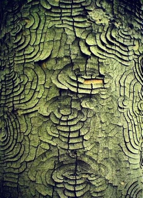 tree pattern pinterest surface design barking and for the on pinterest