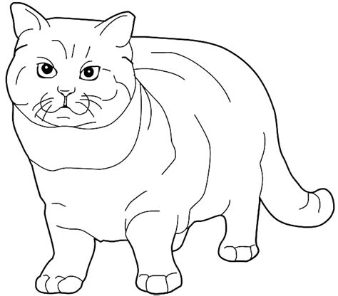 ragdoll cat coloring page coloring british shorthair cat picture