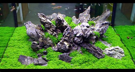 Oliver Knott Aquascaping by 78 Best Images About Planted Nanos On Plants Cubes And Aga