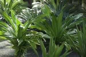 tropical shade plants with pictures ehow
