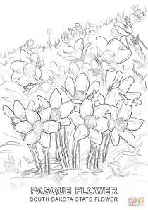 coloring pictures of state flowers south dakota state flower coloring page free printable