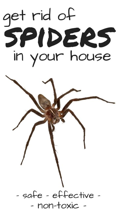 how to kill spiders in house 25 best ideas about brown recluse spider on pinterest
