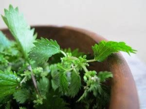 Nettles Liver Detox by We Nettles Three Great Detox Recipes