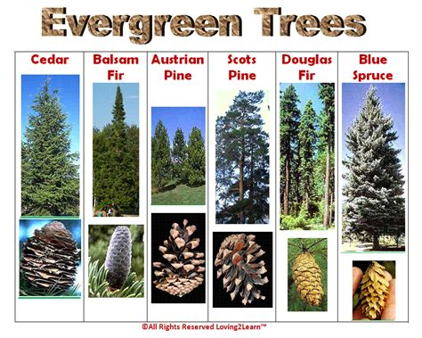 collection tree species guide pictures best