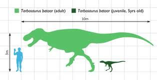 40 meters in feet tarbosaurus theropods wiki