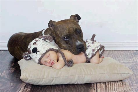 nanny dogs pin by diane griffith on the nanny pitt bull